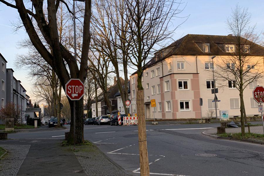 Neue Bäume im Ehrenfeld: Friederikastraße